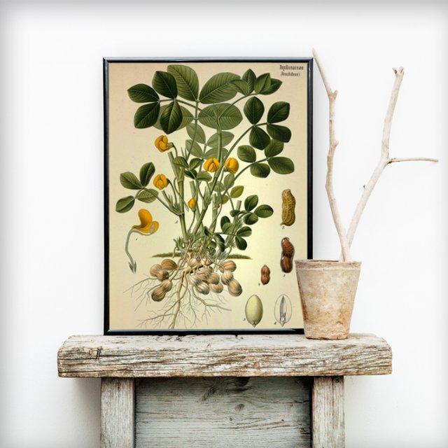 Plakat Botaniczny 50 X 70