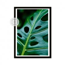 "Plakat ""Monstera"" A3"
