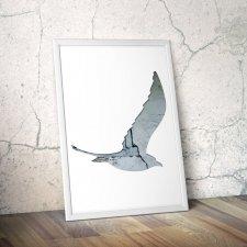 ptaki 36 - plakat A4