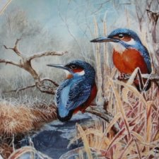coalport 1993 -  kingfisher dawn - by David Feather -frosty mornings limited edition collection 15,000