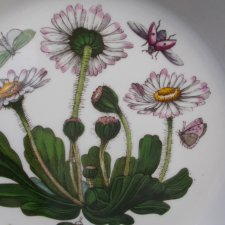 Portmeirion   Botanic   Garden 1972 by Susan Williams Ellis