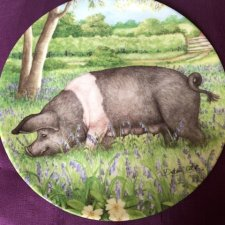 Royal Doulton 1997 -Bluebell  by Debbie Cook a charming ' hampshire ' with  her piglets  in the ' collection kolekcjonerski talerz porcelanowy z certy